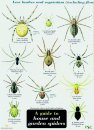 Guide to House and Garden Spiders