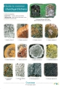 Guide to Common Churchyard Lichens