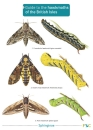 Guide to the Hawkmoths of the British Isles