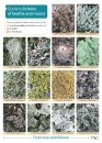 Guide to Lichens of Heaths and Moors Chart