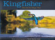 Kingfisher: Tales from the Halcyon River