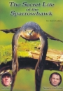 Secret Life of the Sparrowhawk