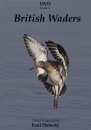 British Waders