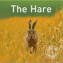 The Hare Cards - 5 Pack