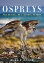 Ospreys The Revival of a Global Raptor