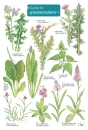 Guide to Grassland Plants 1