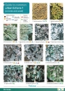 Guide to Common Urban Lichens 1 (on Trees and Wood)
