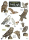 Guide British Owls and Owl Pellets