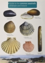 Guide to Common Seashells of Britain and Ireland
