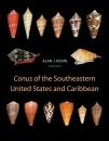 Conus of the SE US and Caribbean