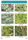 Guide to Mosses and Liverworts of Towns and Gardens