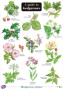 Guide To Hedgerows