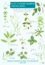 Guide to Ancient Woodland Indicator Plants