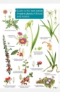 Guide to the Non-Native Invasive Plants of Britain and Ireland