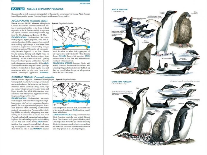 Adelie and Chinstrap Penguins plate